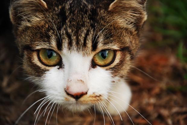 チビしま猫