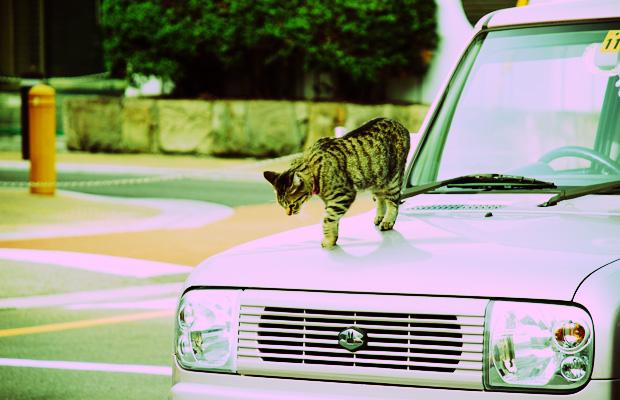 ボンネットに猫-クロスプロセス