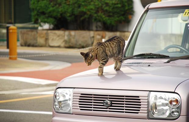 ボンネットに猫-元画像