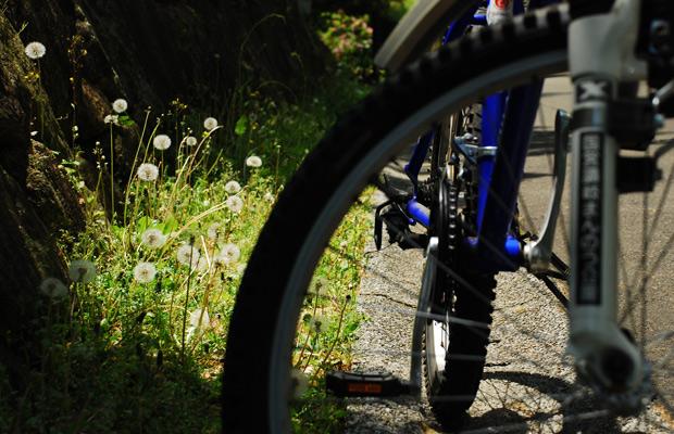 自転車たんぽぽ