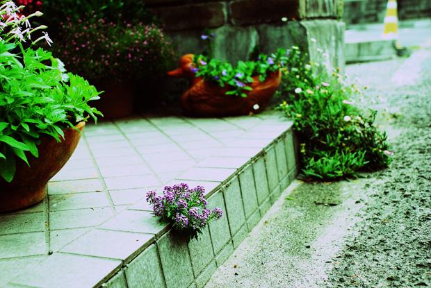 コンクリートに咲く花