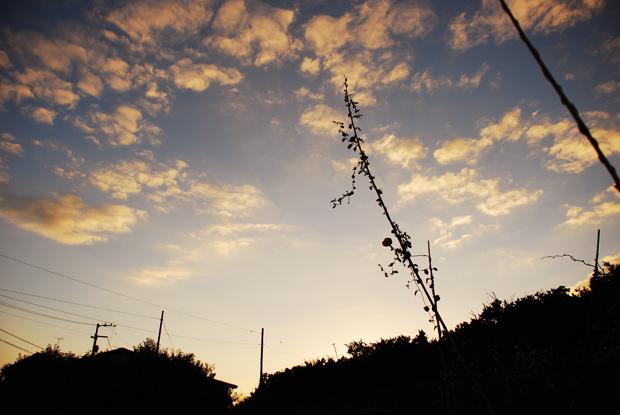 天まで朝顔