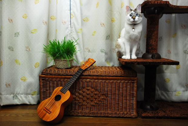 猫とウクレレ