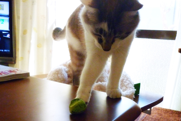 猫キックオフ