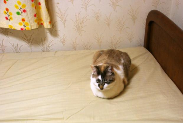 冷たいベッド