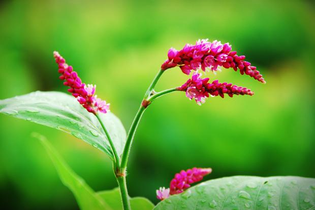 野花に雨粒