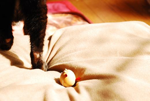 ネコも乾燥肌