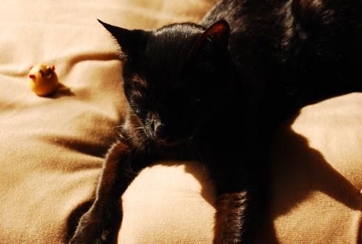 ネコ夢うつつ